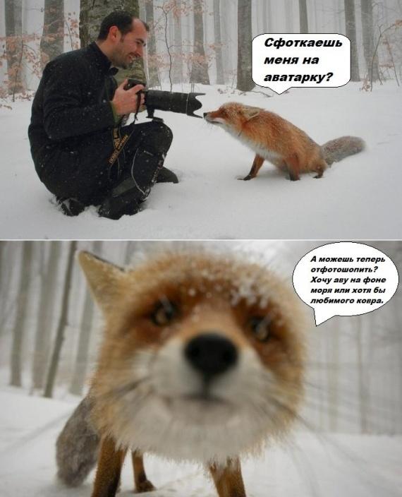 самые самые самые смешные картинки