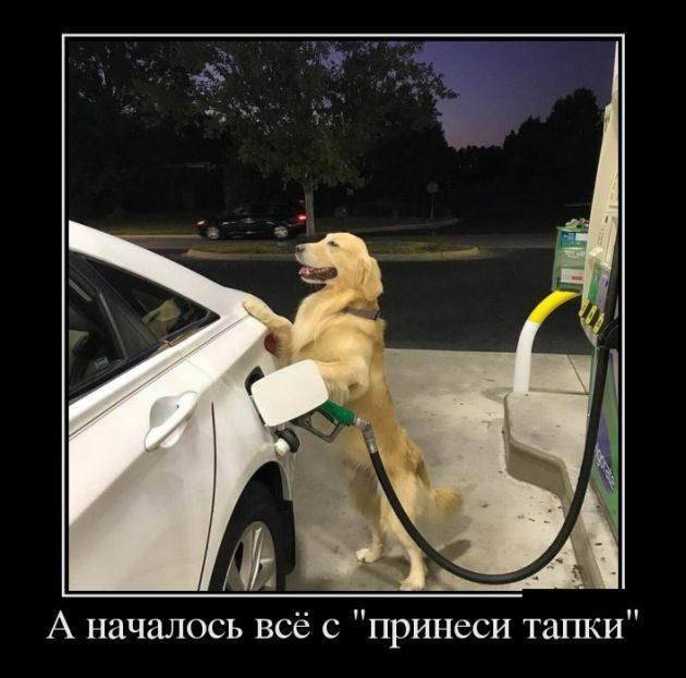 http://image3.thematicnews.com/uploads/images/00/00/39/2017/11/09/5e3f36b0cb.jpg
