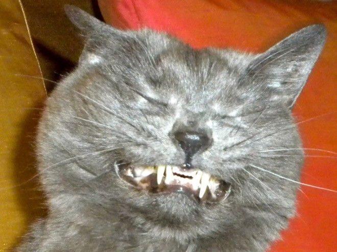 Котенок стал чихать