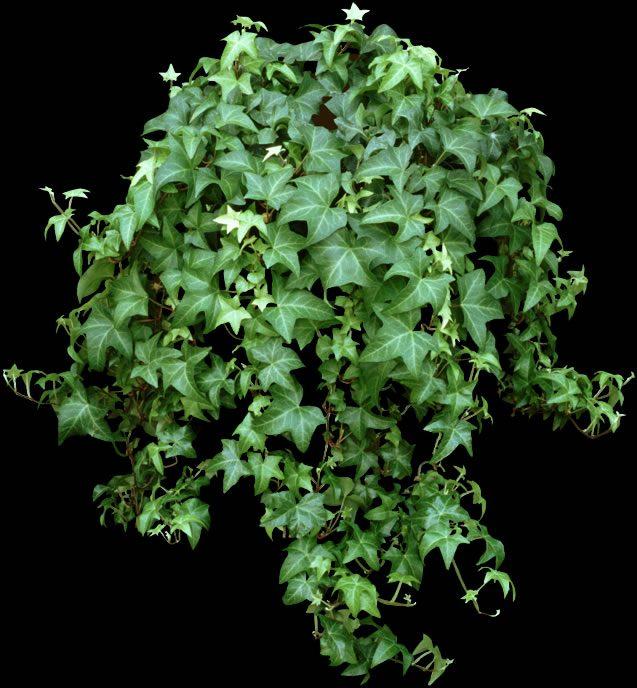 18 полезных комнатных растений, очищающие воздух в доме