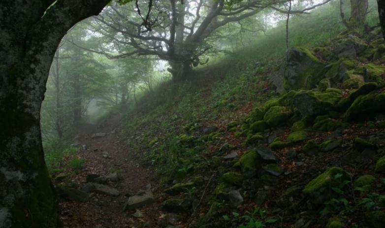 Самые страшные леса в мире