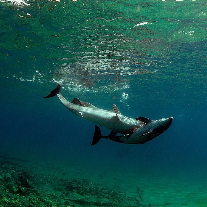 Подводный секс дельфины