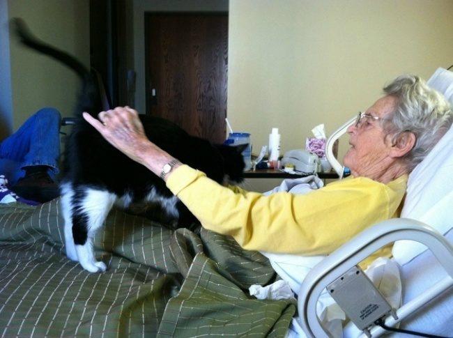 Пост, доказывающий, что у кошек золотые сердца