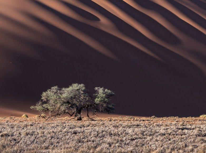 15 лучших кадров месяца от National Geographic