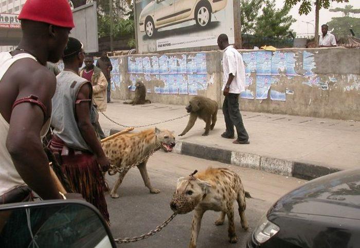 Такое можно увидеть только в Африке
