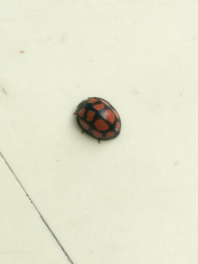 Картинки по запросу leaf beetle
