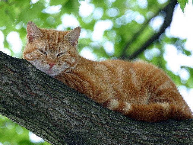 Рыжая кошка в доме — это