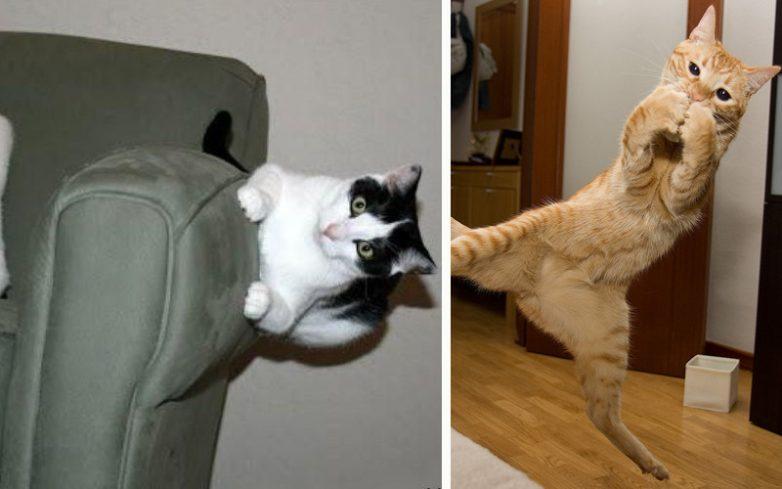 Сумасшедшие коты, которые не слышали о гравитации