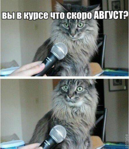 http://image3.thematicnews.com/uploads/images/68/22/64/02016/07/15/7d7ae9e9a5.jpg