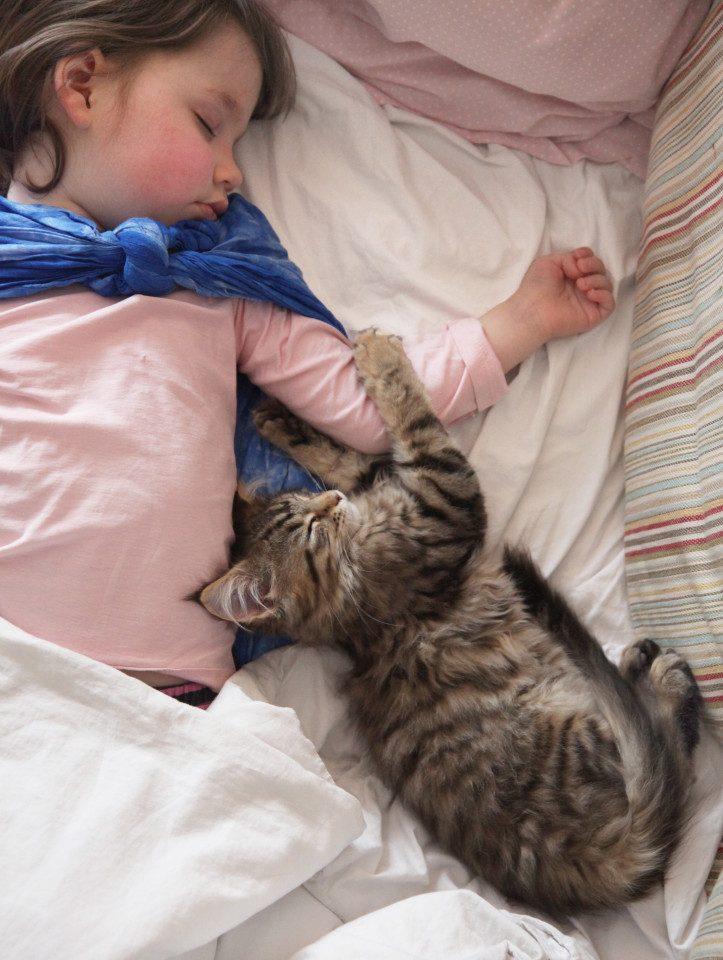 e31cfc1419 Кошка, которая помогла больной аутизмом девочке