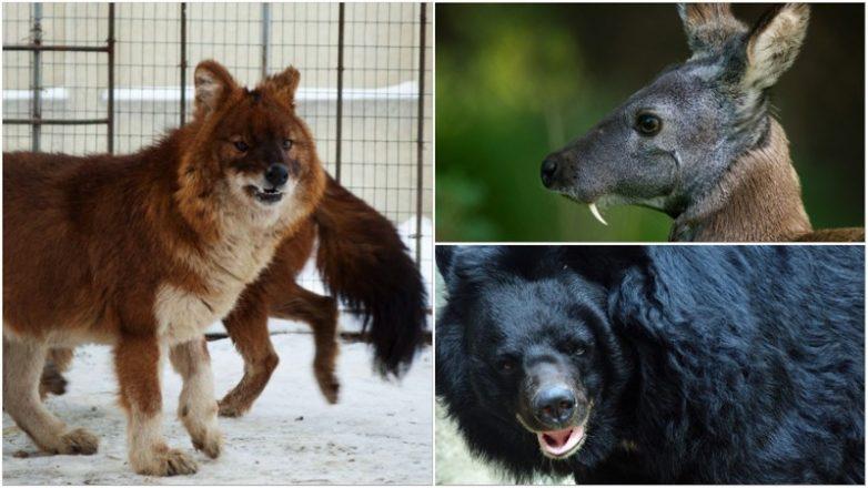 Необычные животные россии