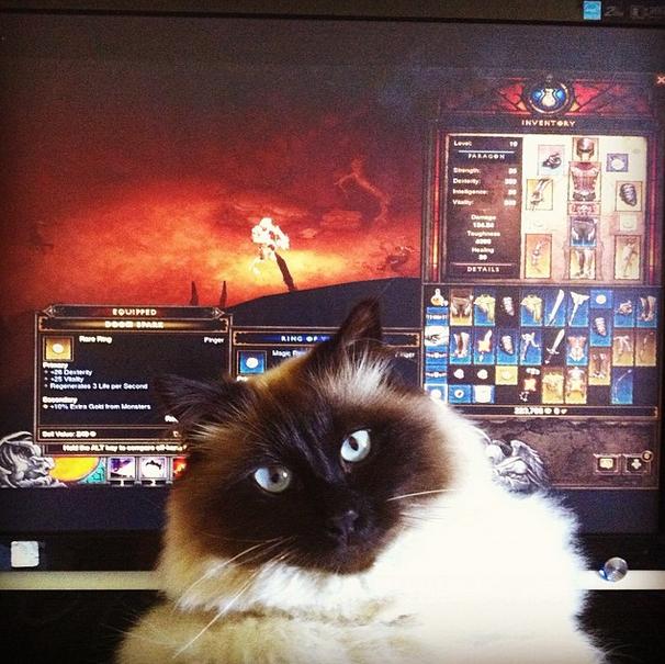 Любите ли вы кошек 49b41cf46f