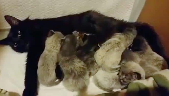 Интересные котята родились у чёрной кошки