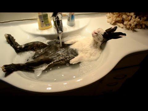 присмотритесь составу сонник перелилась вода в ванной физической нагрузке