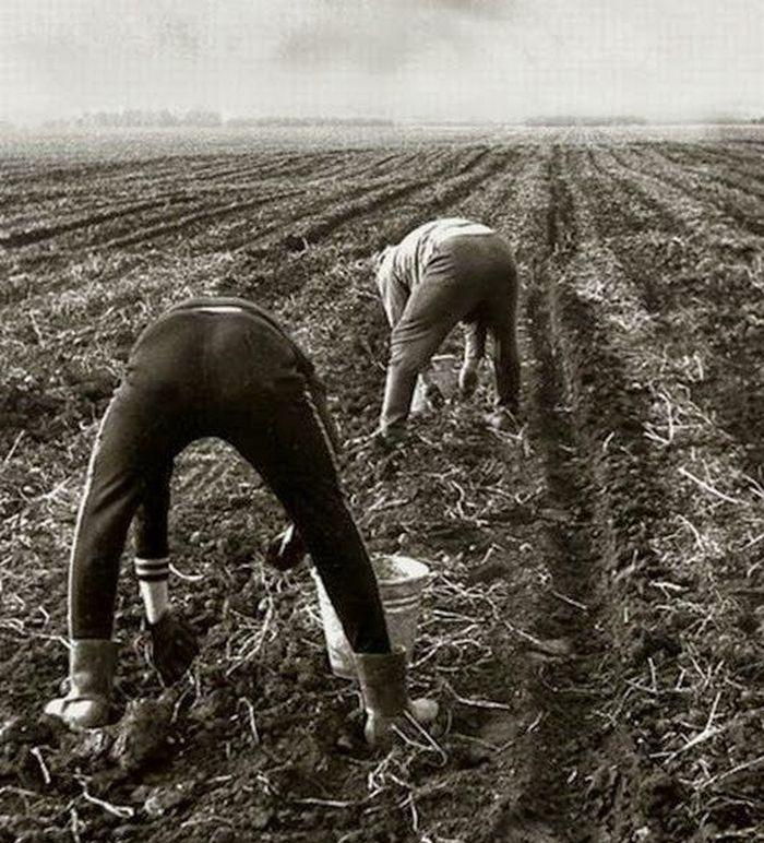 порнорассказ битва за урожай