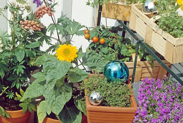 Огород на балконе что посадить