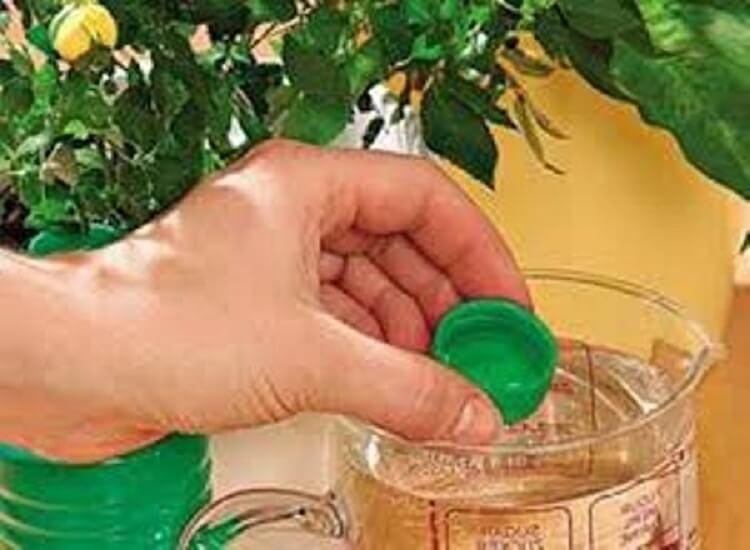 7 способов, которые помогут растениям обильно цвести