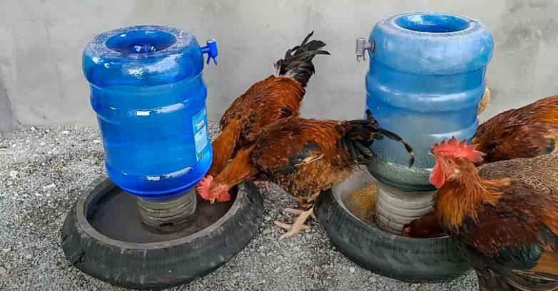 Автоматическая поилка и кормушка для домашней птицы