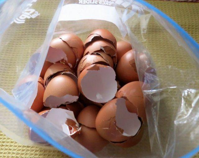 Как правильно применять яичную скорлупу для сада и огорода