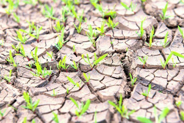 """Вопросы о натуральных удобрениях или Огород без """"химии"""""""