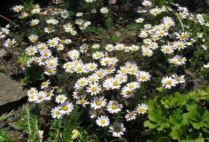 Растения, которые прекрасно растут даже в бедной почве