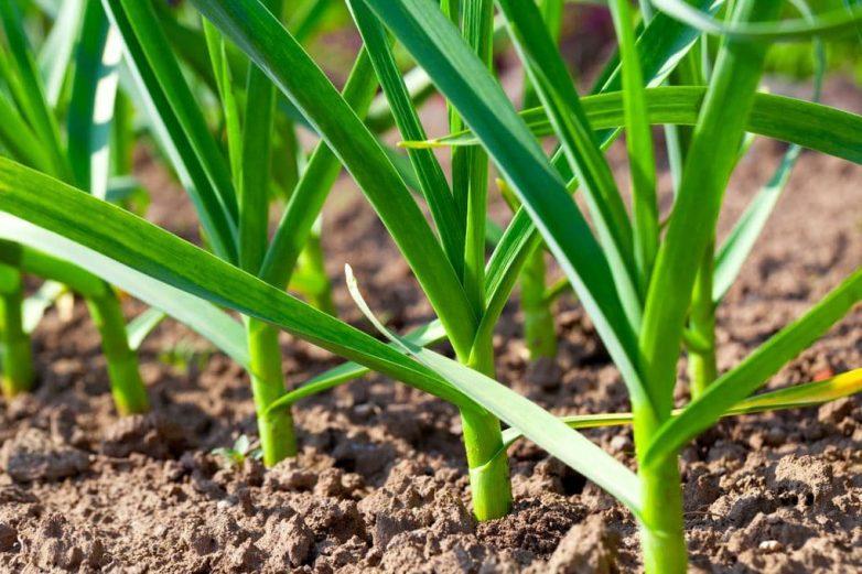 Как быстро и просто защитить сад от ос