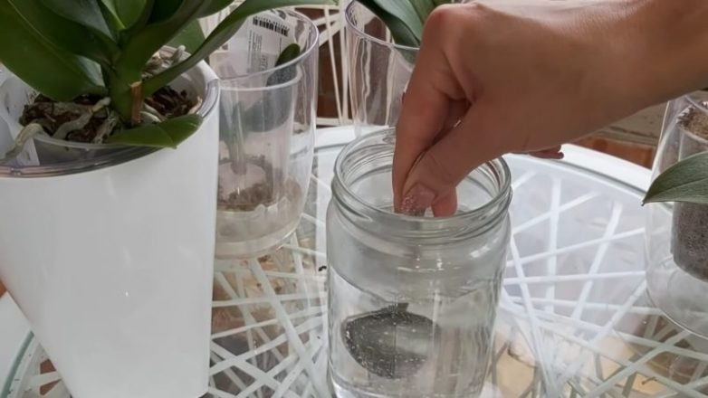 Копеечные таблетки, которые спасут орхидеи от болезней