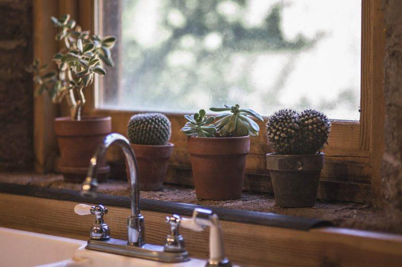 Где нельзя ставить комнатный кактус