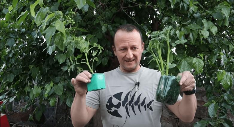 Как скрестить картофель и томат и получить двойной урожай на одном кусте