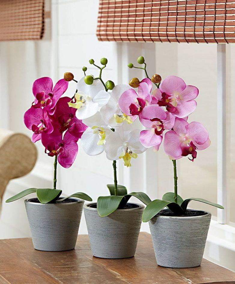Копеечные препараты, которые спасут орхидею и помогут ей нарастить корни