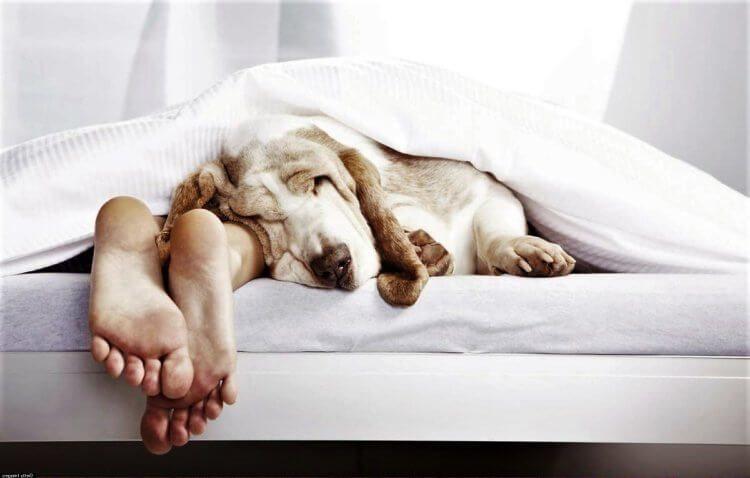 Учёные объяснили, почему некоторым людям трудно вставать по утрам