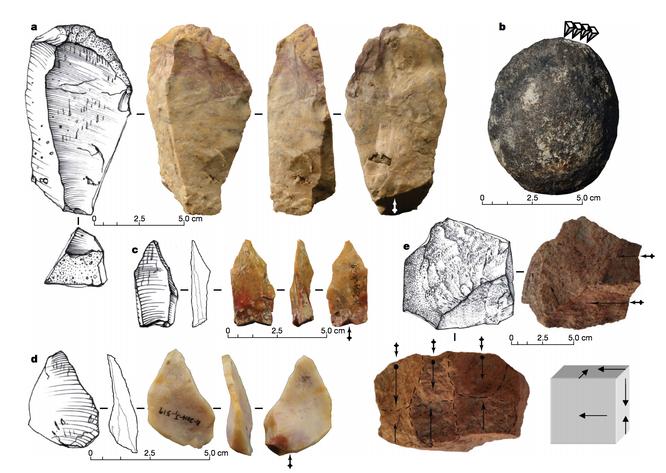 Чем удивил палеонтологов ископаемый носорог