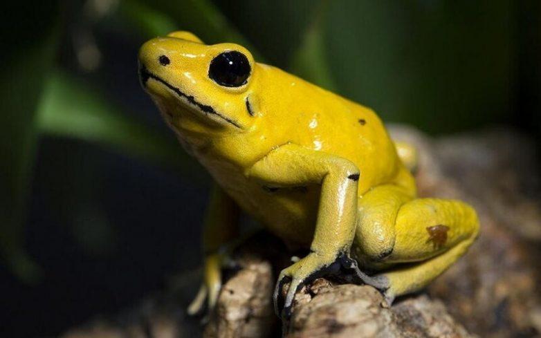 15 самых опасных существ планеты