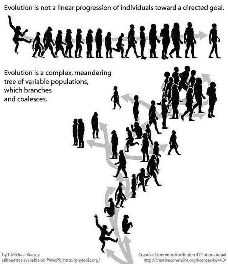 Ещё 7 картинок и твитов, объясняющих разницу между явлениями лучше любых учебников