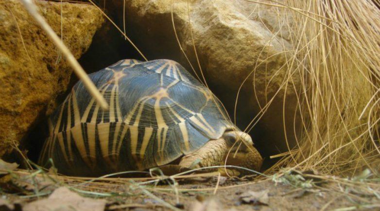 7 животных-долгожителей, которые ставят в тупик даже современных зоологов
