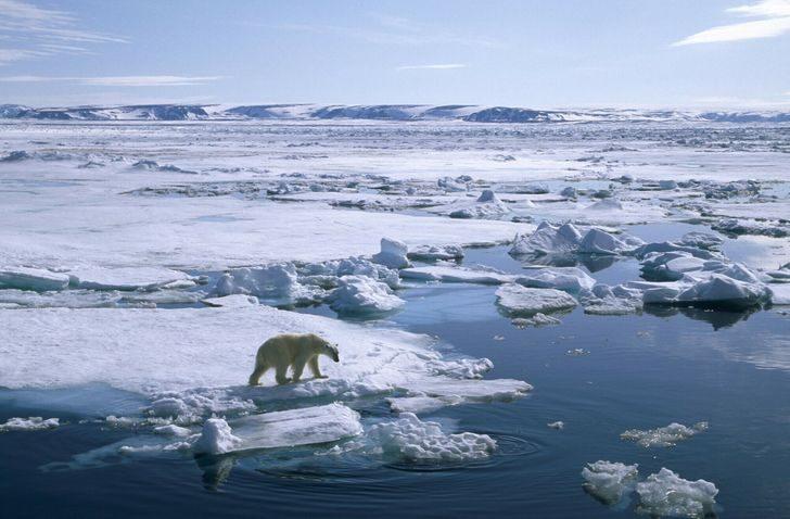 20+ выразительных снимков, показывающих, почему экологи мира бьют тревогу