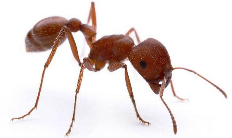 Маленький, да ужасненький: 10 самых страшных насекомых