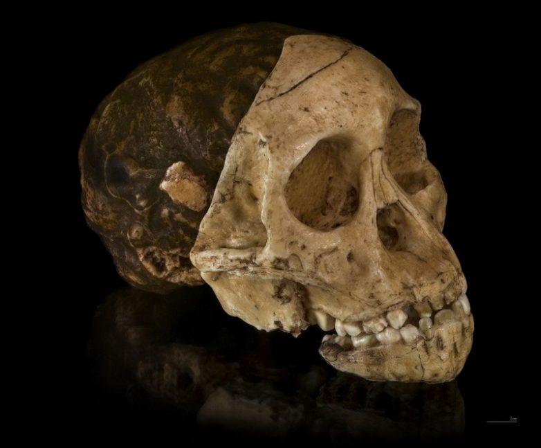 9 находок, проливающих свет на эволюцию человека