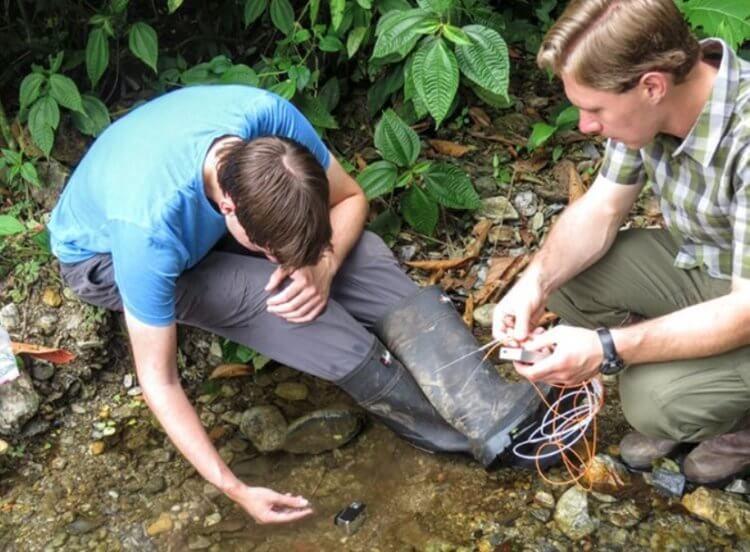 Вопрос на засыпку: как ящерицы дышат под водой?