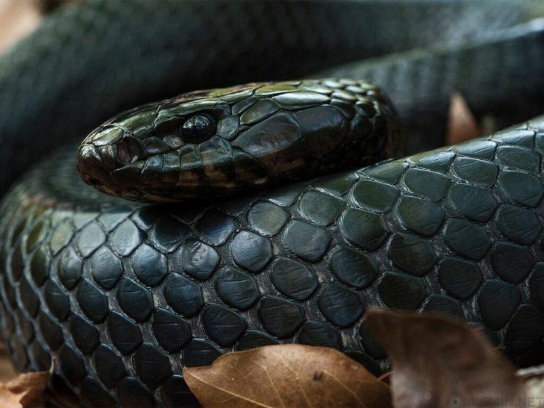 Самые длинные змеи разных видов