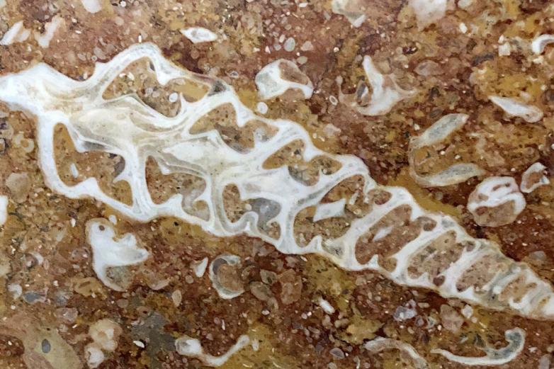 Московское метро как палеонтологический музей