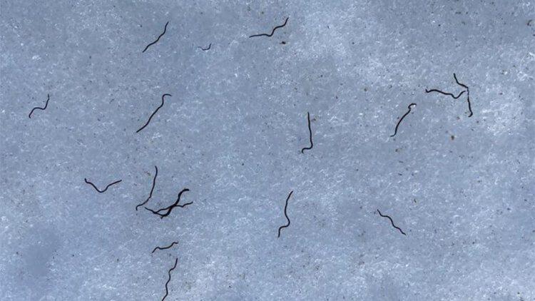 Научный парадокс и его объяснение: почему ледники на северо-западе Тихого океана заселены червями?