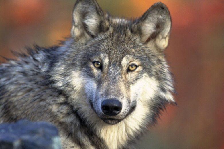 5 видов животных, которых удалось спасти от вымирания