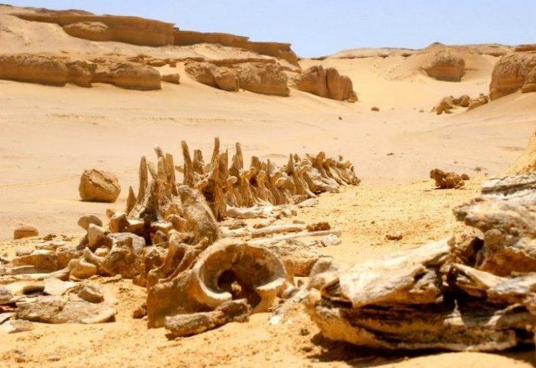 7 загадок Сахары, над которыми по сей день ломают голову учёные