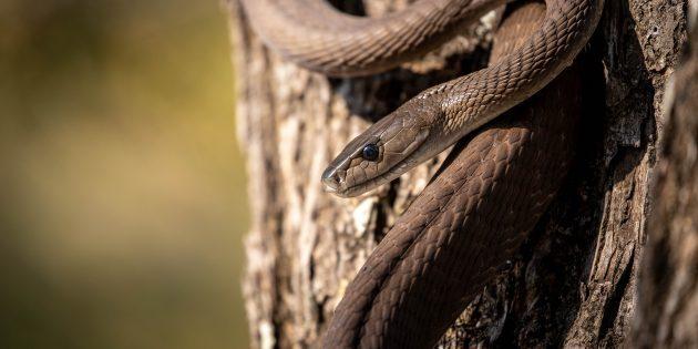 12 популярных мифов о змеях, верить в которые уже просто стыдно