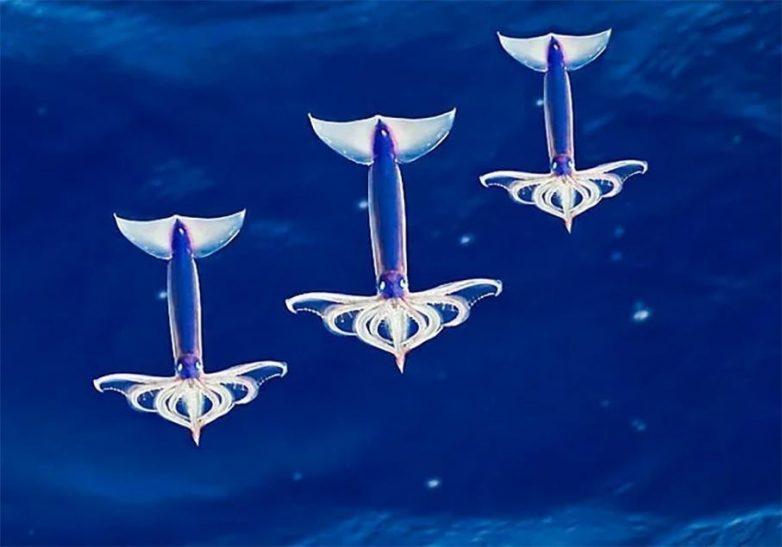 Из жизни летающих кальмаров