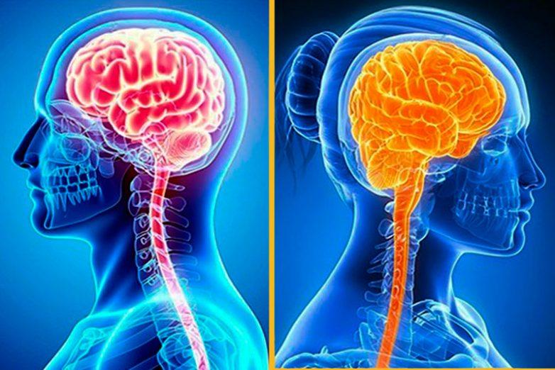 Что нужно вашему мозгу для активности