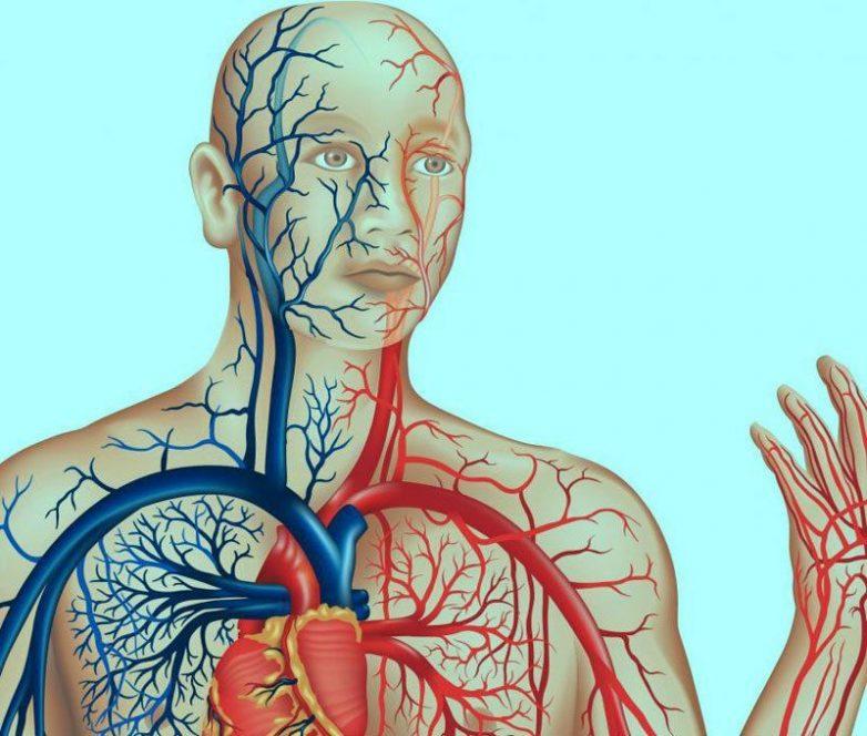 Метод очищения сосудов и восстановления капилляров