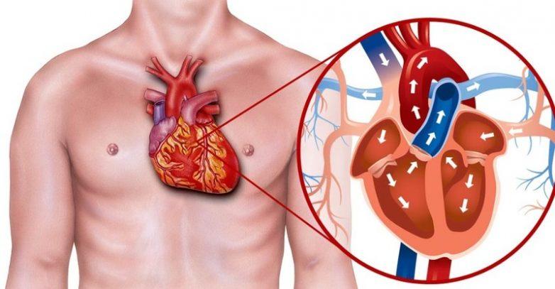 Как сохранить здоровье сердца