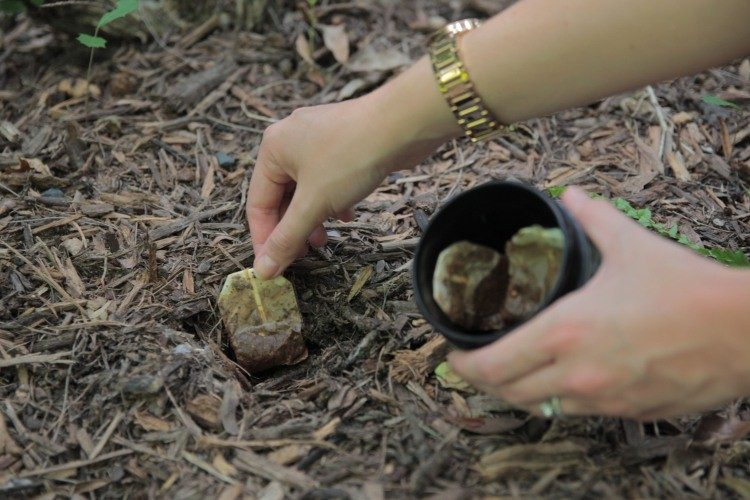 20 необычных способов использования чайных пакетиков